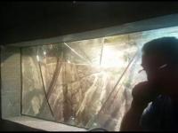 Acvariul din Constanța, inundat de un turist. Ce a făcut atragă atenția peștilor
