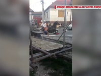 Imagini tulburătoare cu un cal prăbușit în mijlocul drumului. Ce au făcut trecătorii