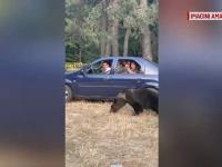 Turiști, filmați hrănind un urs cu chipsuri pe Transfăgărășan. Avertismentul autorităților