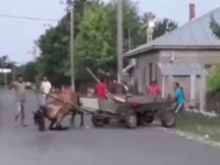 VIDEO. Cal lovit cu bestialitate după ce căruța s-a blocat într-un şanţ. Cum se apără proprietarul