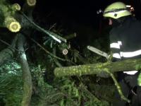O femeie a murit într-o pădure din județul Dâmbovița. I-a căzut în cap un lemn dintr-o remorcă