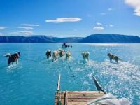Banchiza polară se topeşte mai rapid decât se estimase. Cercetători: Topirea calotei glaciare este iremediabilă