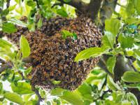 Un bărbat din SUA a fost ucis de un roi uriaș de albine. Mai multe persoane, înțepate de sute de ori