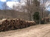 Cum funcționează de fapt noul sistem SUMAL, menit să decurajeze mafia pădurilor