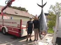 Captură record în Slovenia. Un pescar a reușit să prindă un ton uriaș, de peste 250 de kilograme