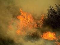 Tragedie în Bulgaria. Doi oameni au murit în timp ce luptau împotiva unui incendiu forestier