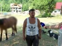 Cal rănit grav de urs, a alergat până la jumătatea satului cu fiara în spate. Medicii l-au eutanasiat