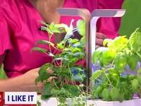 iLikeIT. Cum putem crește plante acasă, în orice condiții, cu ajutorul unor jardiniere smart
