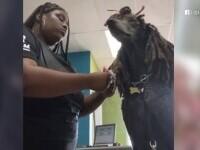Un câine din SUA are cea mai neobișnuită coafură. Incredibil ce i-a făcut o stilistă