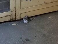 Misiune de salvare mai puțin obișnuită, în Pitești. O pisică a rămas blocată sub o ușă