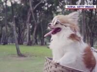 Oamenii din toată lumea au umplut internetul de poze de Ziua Internațională a Câinelui. Ce fotografie a postat Florin Cîțu