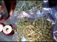 Peste 200 de plante de cannabis, ridicate de procurorii DIICOT. Procurorii au mai găsit și un kilogram de droguri
