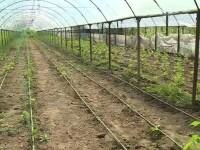 """De ce nu se mai înscriu fermierii la programele lansate de Ministerul Agriculturii. """"Nu prea merită"""""""