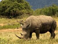Cele mai rare exemplare de rinoceri, surprinse intr-un parc din Java