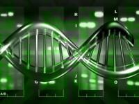 Propriul creier te poate ingrasa! Cercetatorii leaga obezitatea de ADN