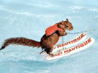 Veverita, maestra a schiului nautic. Cum cine? Twiggy!