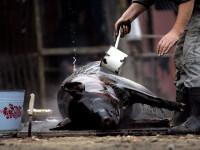 A murit inecat cu o bucata din carnea porcului abia taiat. Nu este primul caz in acest sat din Prahova