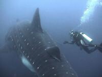 Razboi in apele Antarcticii intre vanatorii de balene si ecologisti