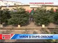 Romania te iubesc: Brazii smulsi din radacina, noul spirit al Craciunului?