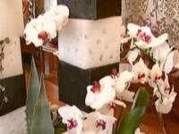 Opere de arta din flori, stranse in premiera la o expozitie din Capitala!