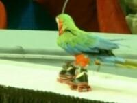 Papagalii uriasi si clovnii lui Muc i-au incantat spectatorii de la circ!