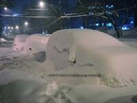 Ger siberian in Bulgaria, asezonat cu ninsoare abundenta si viscol