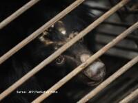 Ursul Muki a ajuns de la pensiunea primarului intr-o rezervatie, dupa 9 ani
