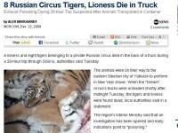 Cruzime fara margini! Animale de la circ, moarte din cauza ingrijitorilor