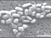 NASA: Bacteria care traieste in arsenic,