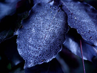 Incredibil! Pe Gliese 581g, sora geamana a Pamantului, cresc plante negre?!