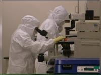 cercetatori, microscop