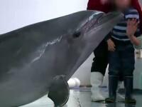 Terapia cu delfini, o sansa de vindecare pentru copiii care sufera de autism