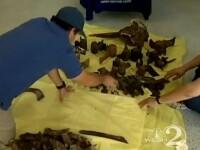 VIDEO. Uraganul Sandy a scos la lumina ramasitele unui animal putin cunoscut de biologi