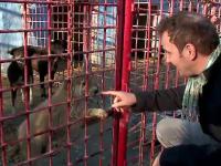 Cozi la adoptii de caini inainte de Craciun. Mihai Traistariu, prezent printre iubitorii de animale