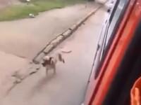 Imagini impresionante surprinse intr-un oras din Brazilia. Un catel alearga pe langa ambulanta in care e tratat stapanul sau
