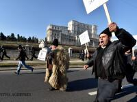 Ciobanii i-au invins pe politicieni: