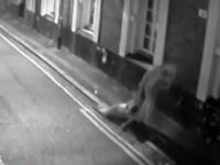 Atac violent pe strada. Momentul in care un barbat a tarat de par si a lovit o femeie, sub ochii trecatorilor. VIDEO