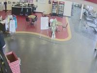 Un cerb a patruns intr-o sala de fitness printr-un geam. Cum a reusit animalul sa iasa