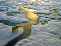 Temperatura medie globală ar putea crește cu 4 grade C până la sfârșitul secolului