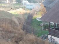 Cal bătut cu sălbăticie, abandonat în curtea unei biserici din Constanța