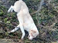 Cățelușă împușcată, găsită agonizând în județul Cluj. Mister în jurul incidentului