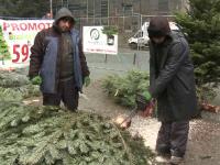 Comercianții au început să vândă pomi de Crăciun în rate fixe. La ce prețuri au ajuns brazii