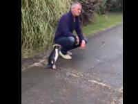 """Imaginile devenite virale. Reacția unui pinguin când își revede """"un vechi prieten"""""""
