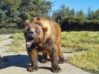 Sfârșit tragic pentru un bărbat care ținea un urs ca animal de companie