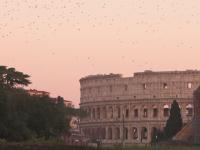Locuitorii Romei, terorizaţi de păsări. Oamenii nu mai ies din casă fără umbrelă