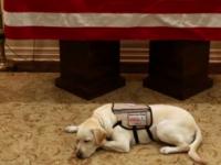 Ce se va întâmpla cu Sully, câinele fostului președinte american George Bush Sr.