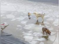 Intervenție periculoasă a pompierilor clujeni pentru salvarea a 2 vulpi