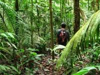 Sute de guatemalezi trudesc sa scoata la lumina o uriasa piramida mayasa