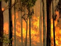 Un nou val de incendii pare sa puna stapanire pe sud-estul Australiei!