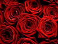 Parada Trandafirilor, o traditie veche de 121 de ani in California!